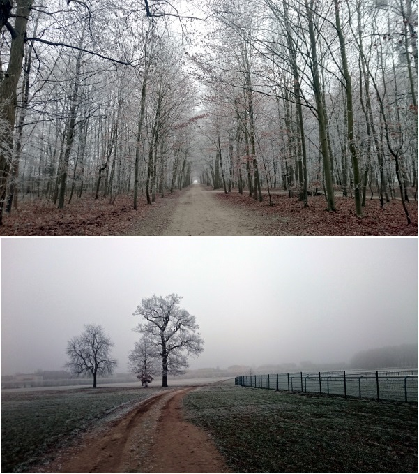 Chantilly forest