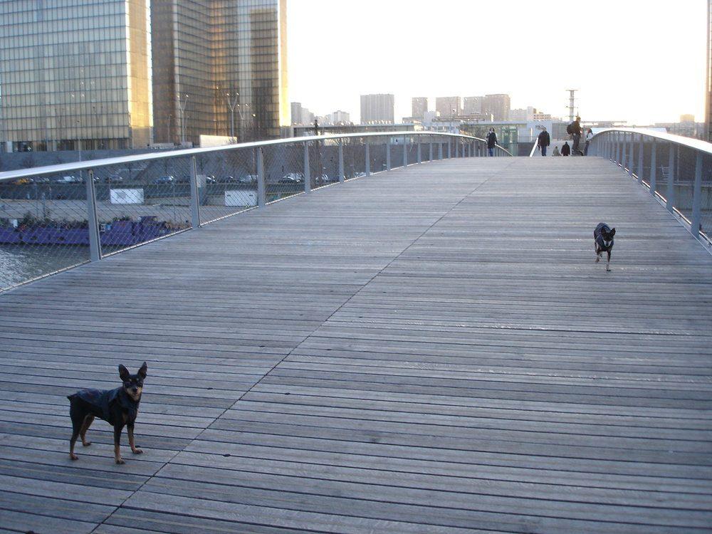Dogs on the pedestrian bridge