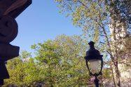 Spring trees Paris