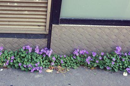 flowers in sidewalk crack