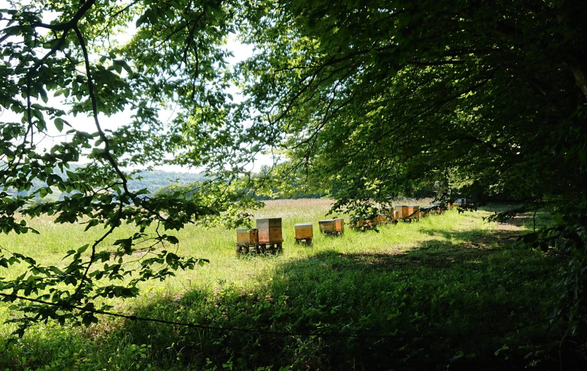Beehives in countryside